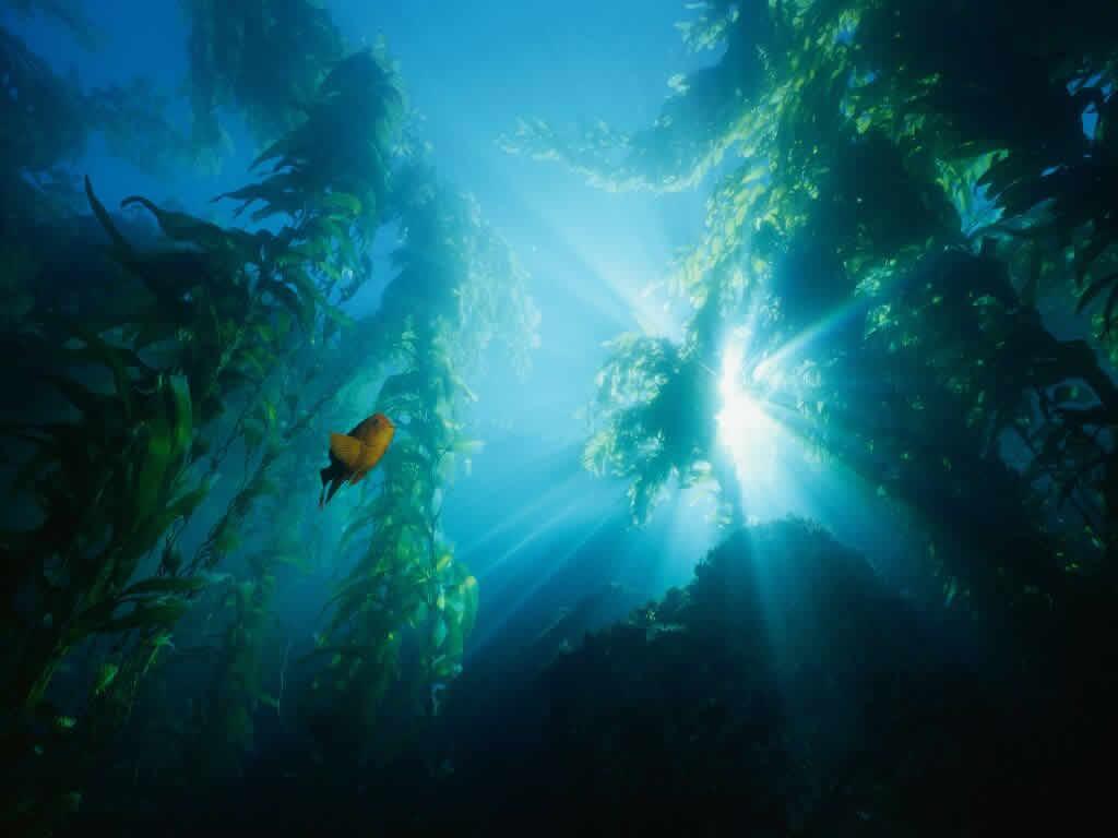 Они представляют собой длинное узкое понижение дна океана глубиной